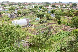 West Tarring Allotments is offering visitors a guided tour as part of the Open Gardens initiative, being held by Care for Veterans. Photo by Derek Martin DM1963961a