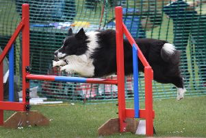 Watch a dog agility demonstration and put your own four-legged friend to the test at this new event for Angmering