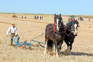 """DM1992791a.jpg. West Grinstead & District Ploughing & Agricultural Society�""""s annual ploughing match and show. Photo by Derek Martin Photography. SUS-190921-180249008"""