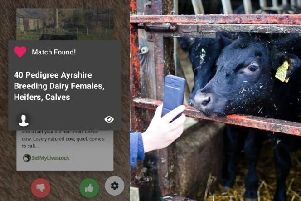 Tudder, app for farmers to match with livestock. Created by Jamie McInnes from Rowlands Castle.