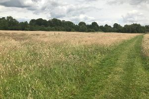 Boughton Road urban meadow. Image: Rugby Borough Council.