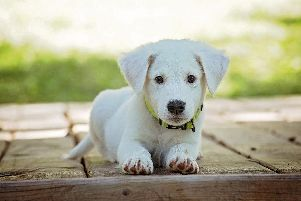 If this little pooch didn't like a potential partner, you'd have to dump them, surely?!