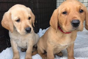 Puppies Quaver and Quest are most likely to blame for the appeal's popularity